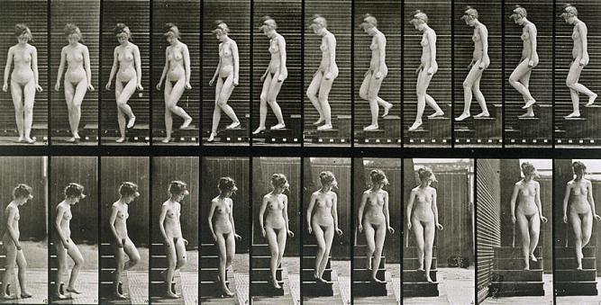 1895_mechanical_butcher_005_eadweard_muybridge_woman_1885